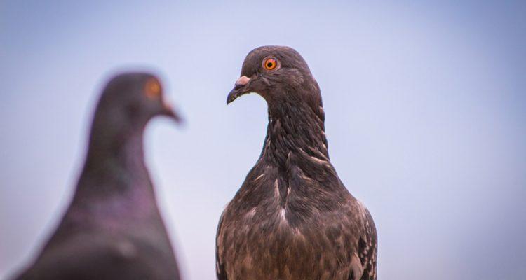 birds-1521174_1920
