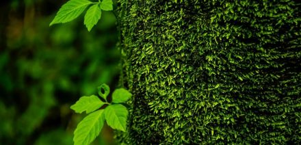 trees-1664991_1280